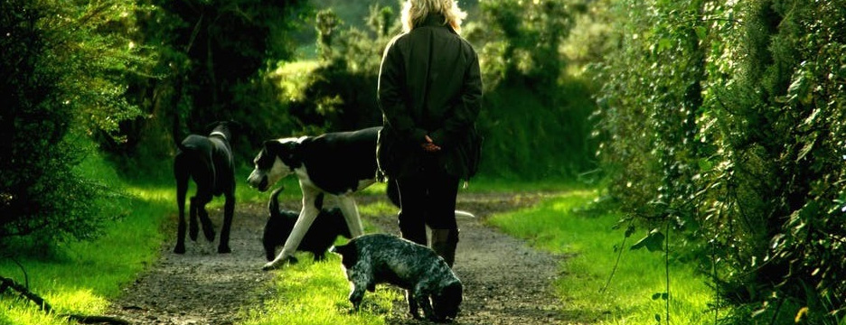 Image of women walking dogs