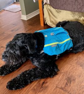 Image of dog, Boaz, with backpack