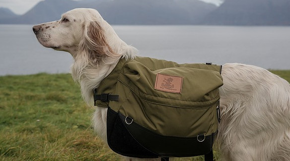 Image of dog with backpack