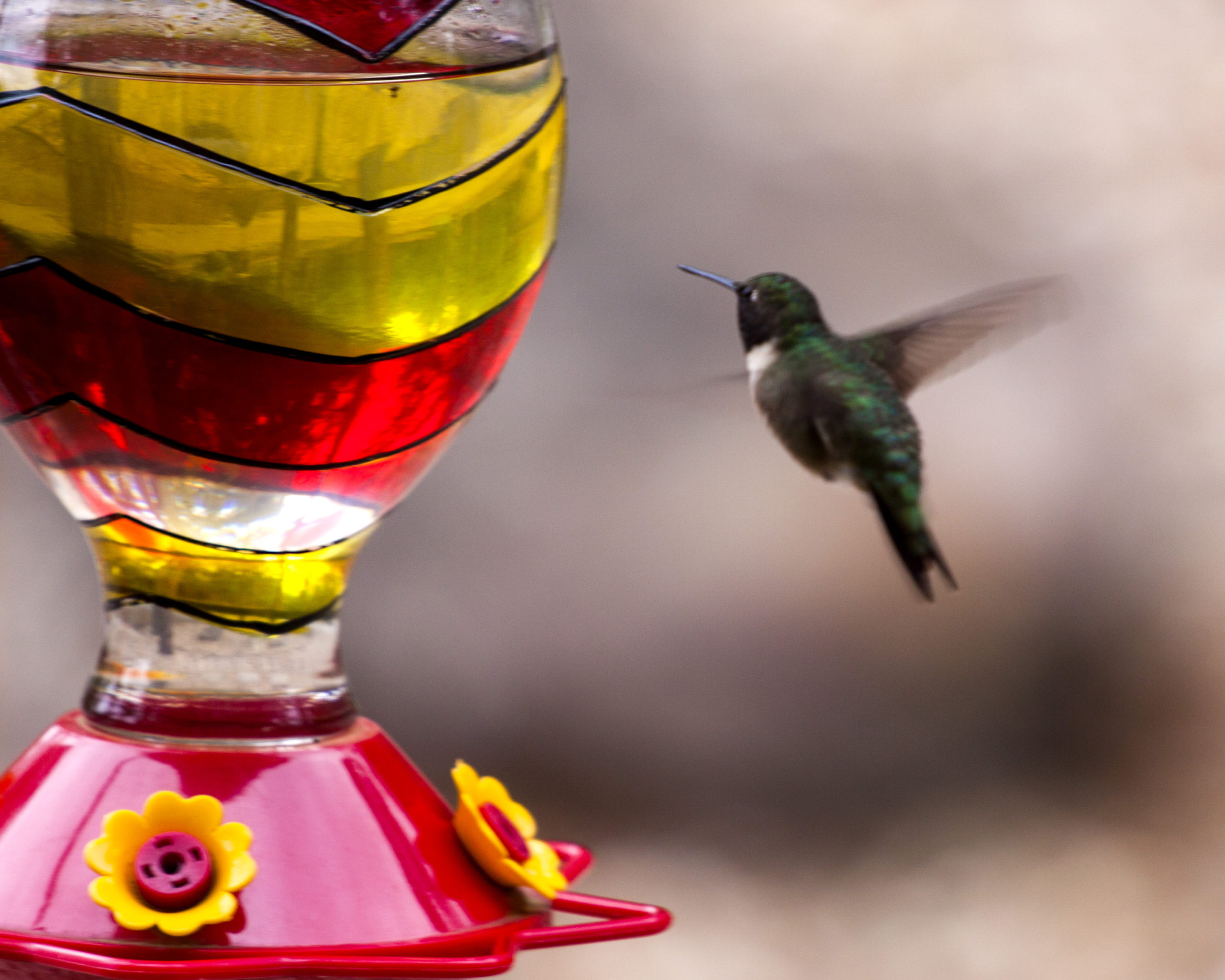 Image of hummingbird at feeder