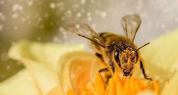 Image of a bee on a flower with pollen in the air
